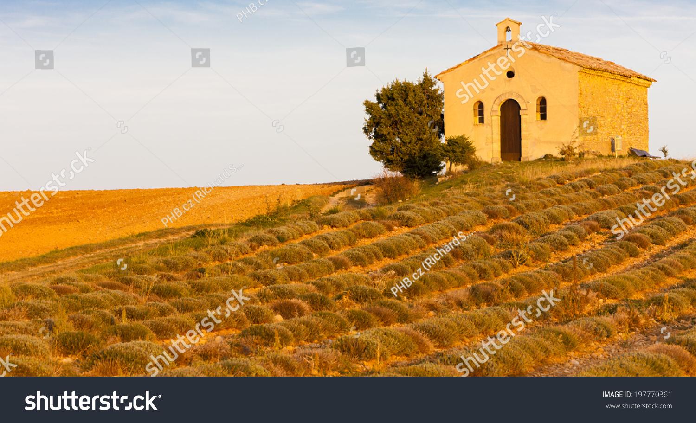 Chapel lavender field plateau de valensole stockfoto 197770361 shutterstock - Aperitief plateau huis van de wereld ...