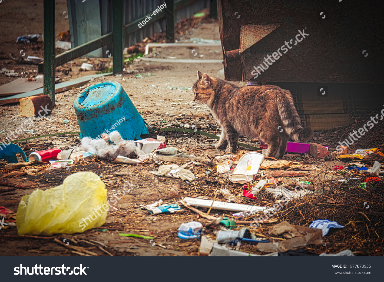 stock-photo-dirty-stray-cat-exploring-li