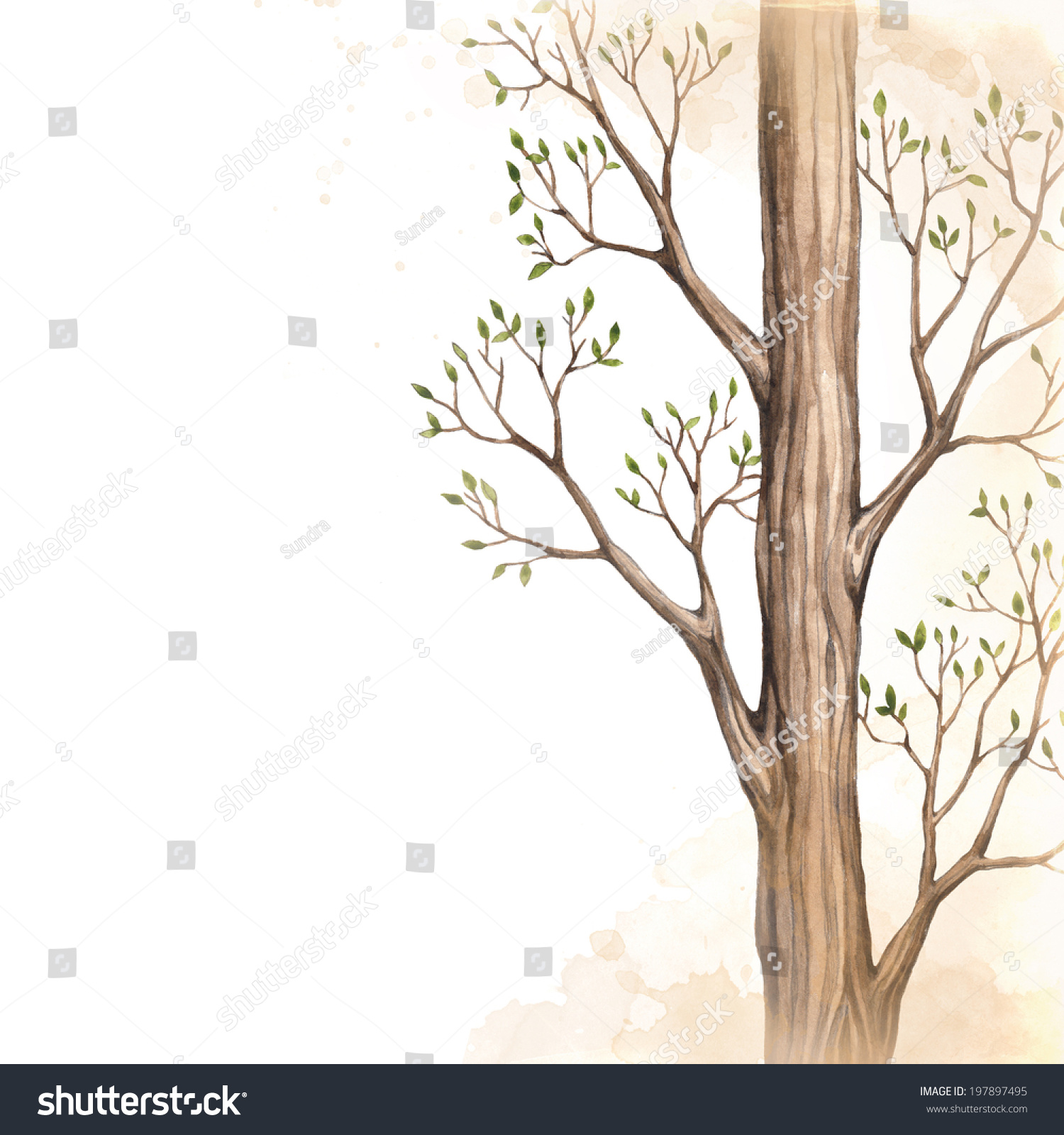 It is a picture of Trust Tree Background Drawing