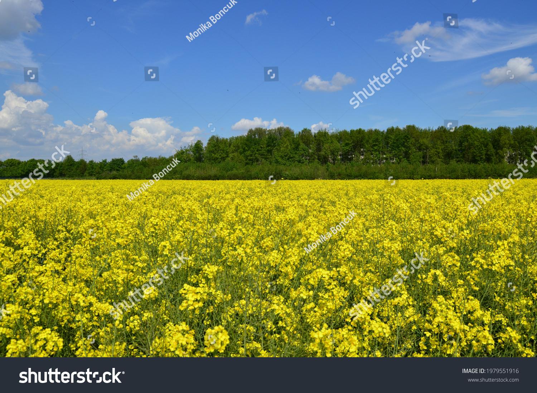 stock-photo-a-wonderful-spring-landscape