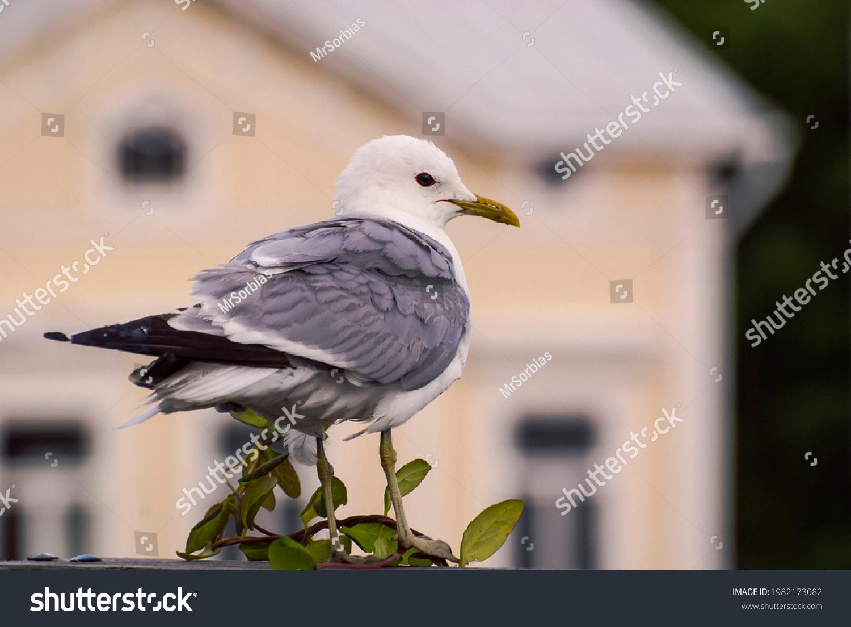 stock-photo-sea-gull-with-nice-house-bac