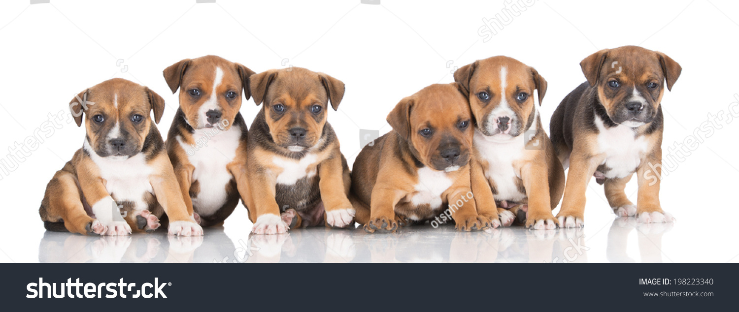 Group Puppies Stock Photo Edit Now 198223340 Shutterstock