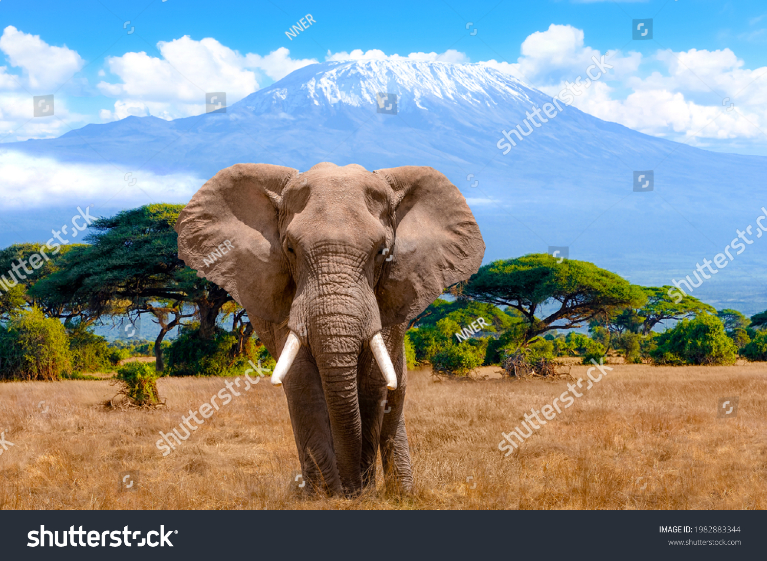 A male elephant in front of Mount Kilimanjaro in Kenya National Park, Africa #1982883344