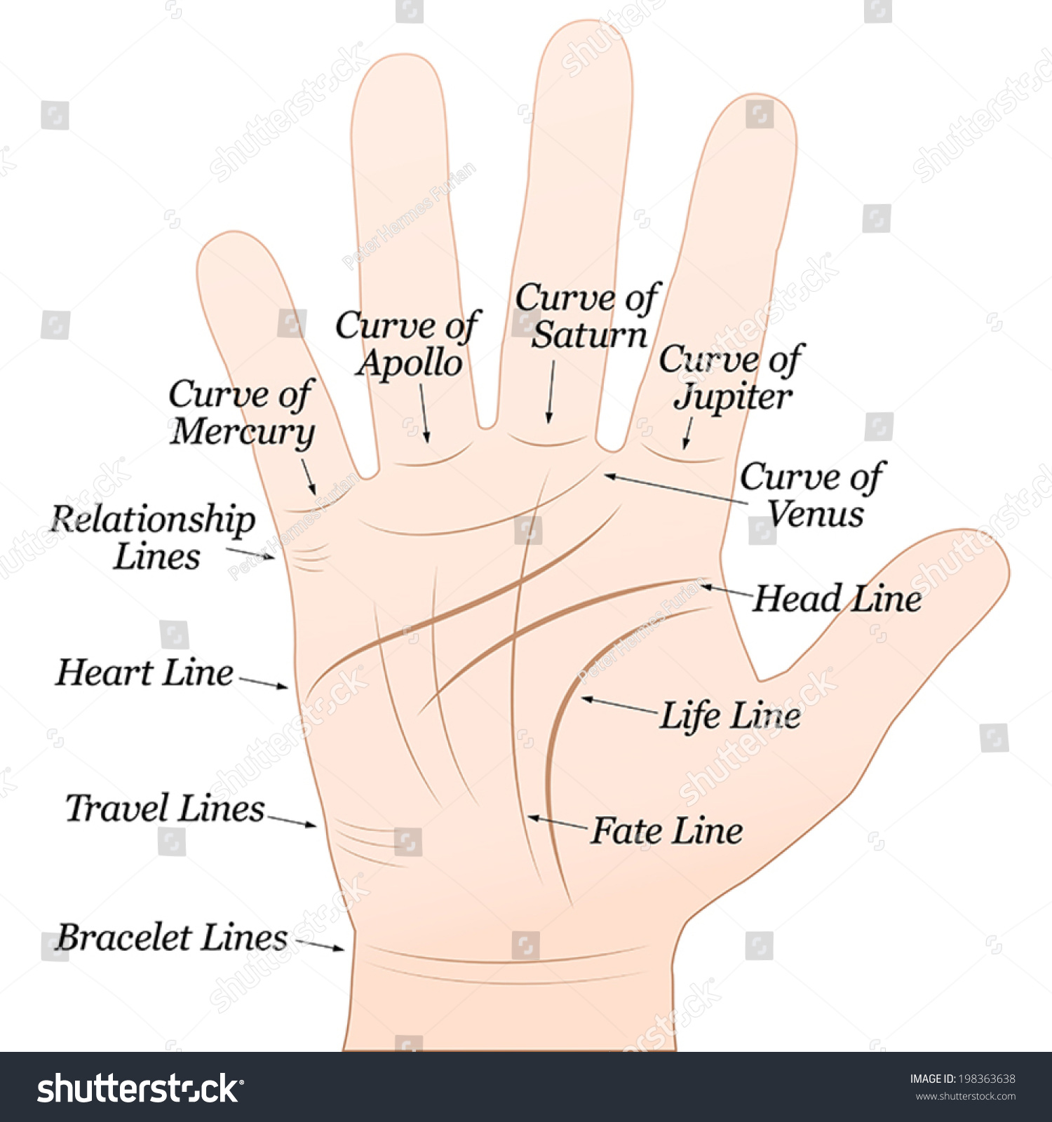 Palmistry Right Hand Lines Their Names Stock Vector (Royalty Free ...
