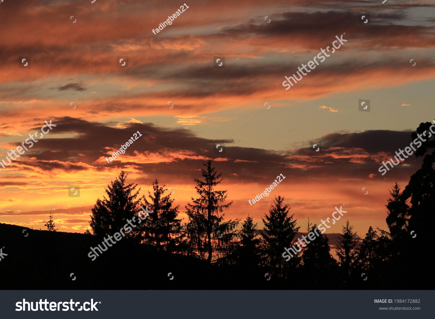 stock-photo-a-colorful-sunset-sky-pine-t