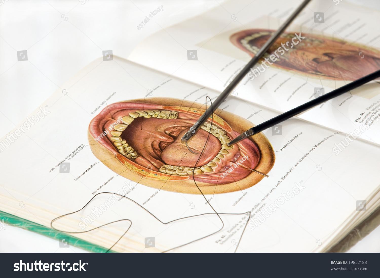 Erfreut Atlas Of Surgical Anatomy Fotos - Menschliche Anatomie ...