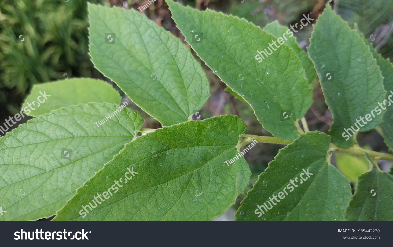 a green leaf close up #1985442230