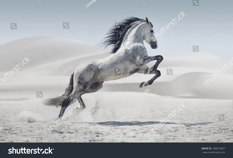 Wild Horse Dust Stock Photo Edit Now 198675047