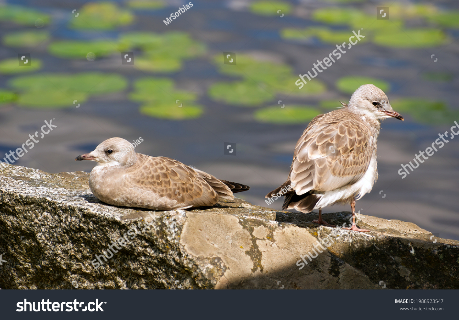 stock-photo-baby-seagulls-sitting-on-a-s