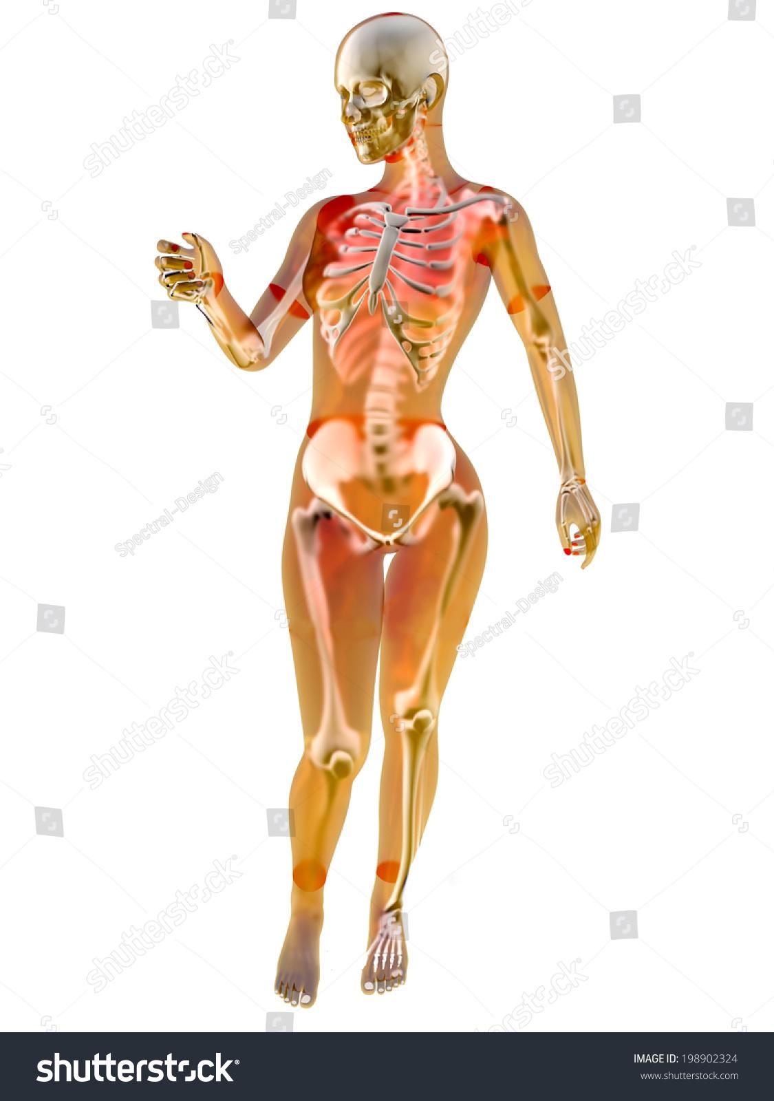Female Anatomy Visualisation 3 D Illustration Isolated Stock ...