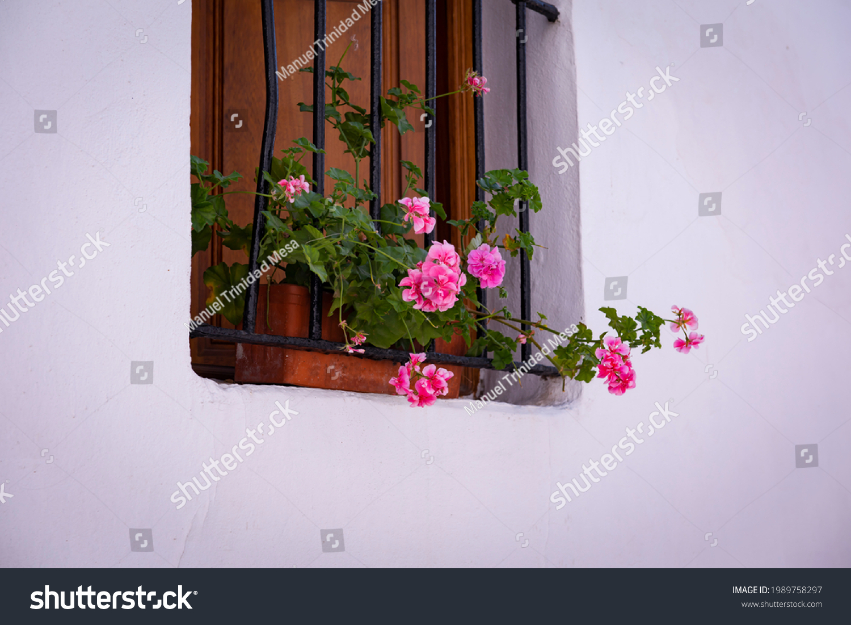 stock-photo-geranium-flowers-in-a-rustic