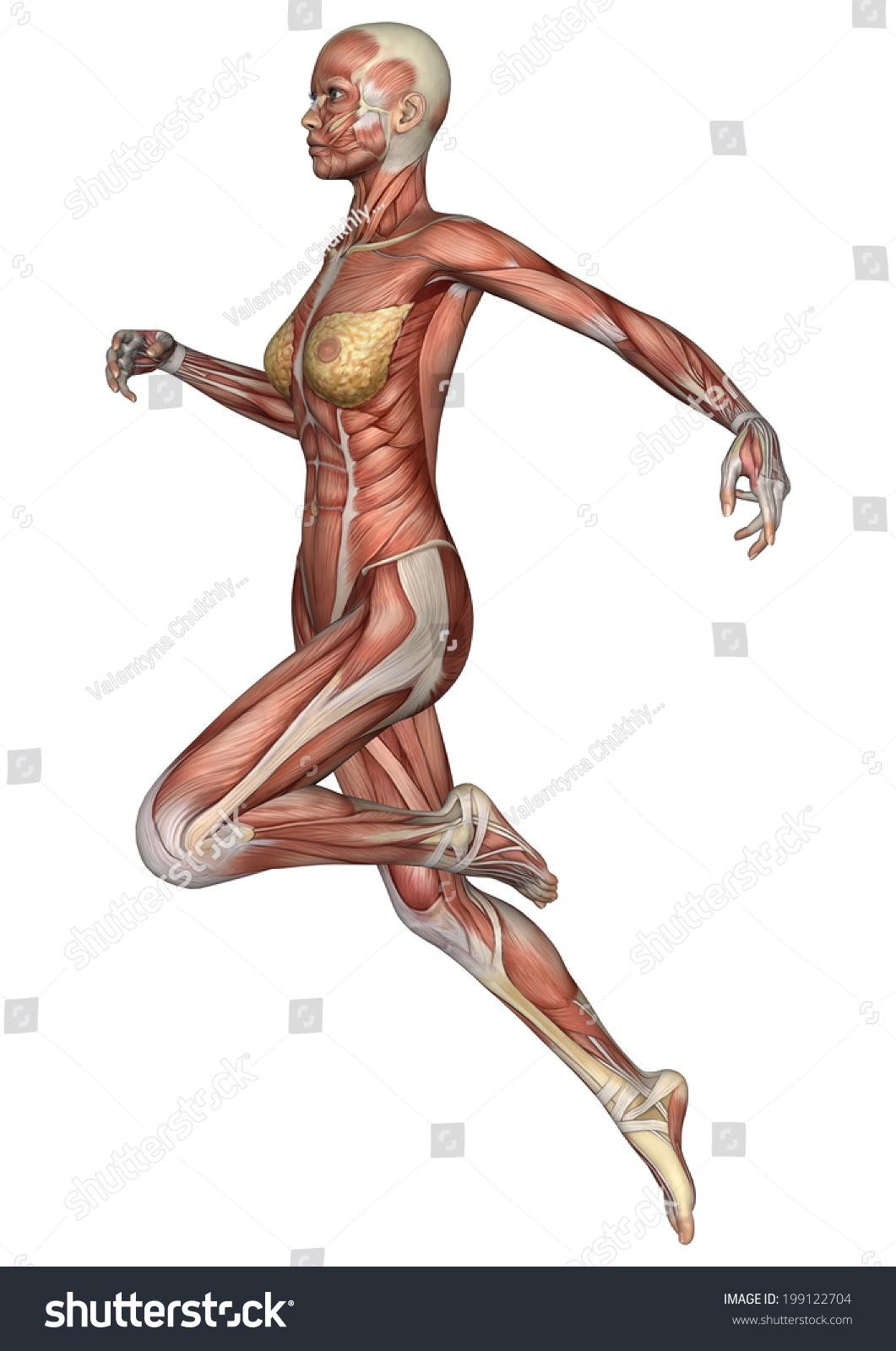 3 D Digital Render Running Female Anatomy Stock Illustration