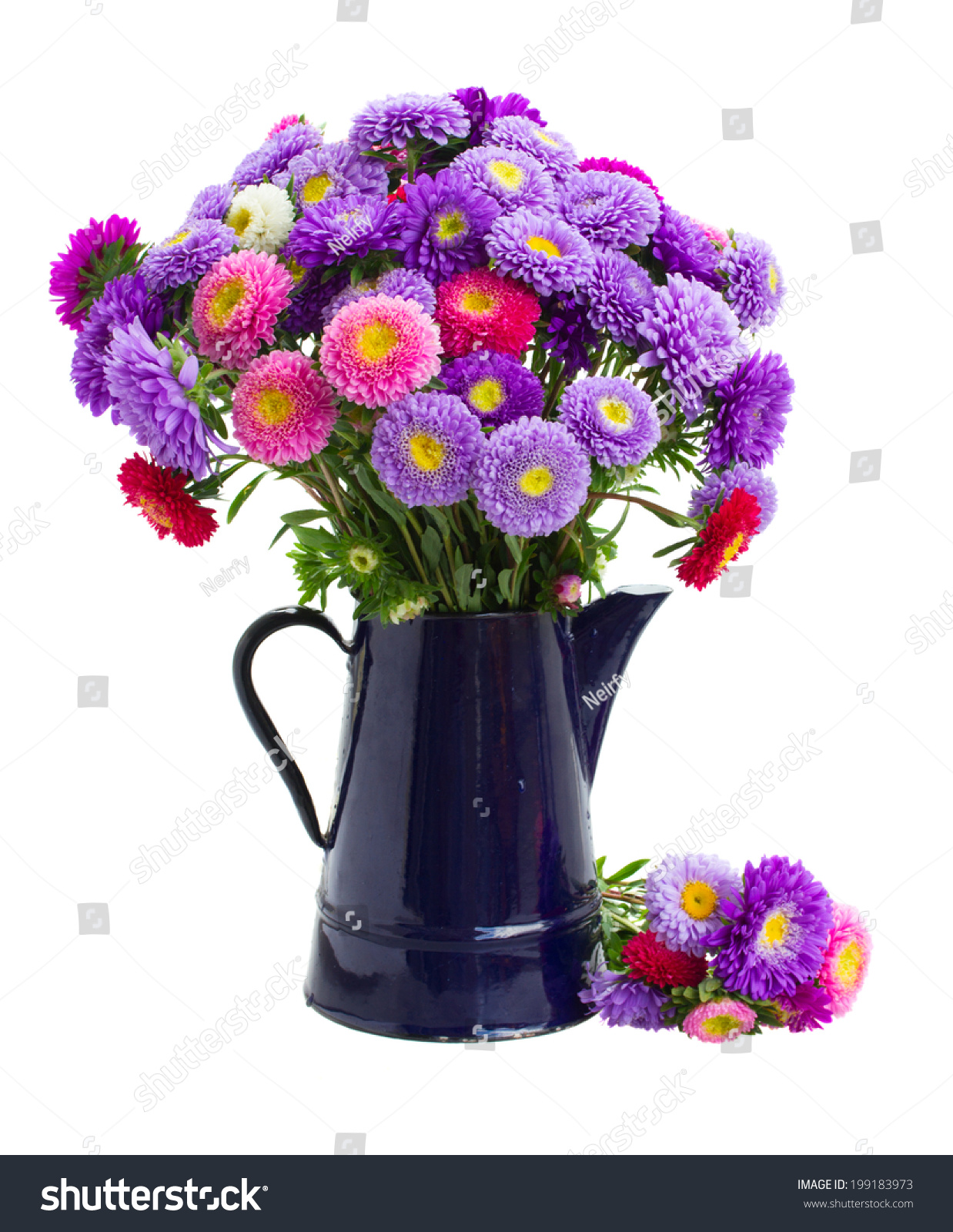 Fresh aster flowers bouquet blue pot stock photo edit now fresh aster flowers bouquet in blue pot isolated on white background izmirmasajfo