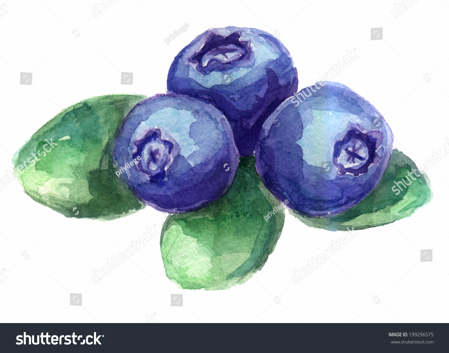Watercolor Sketch Blueberries Stock Illustration 199296575 ...