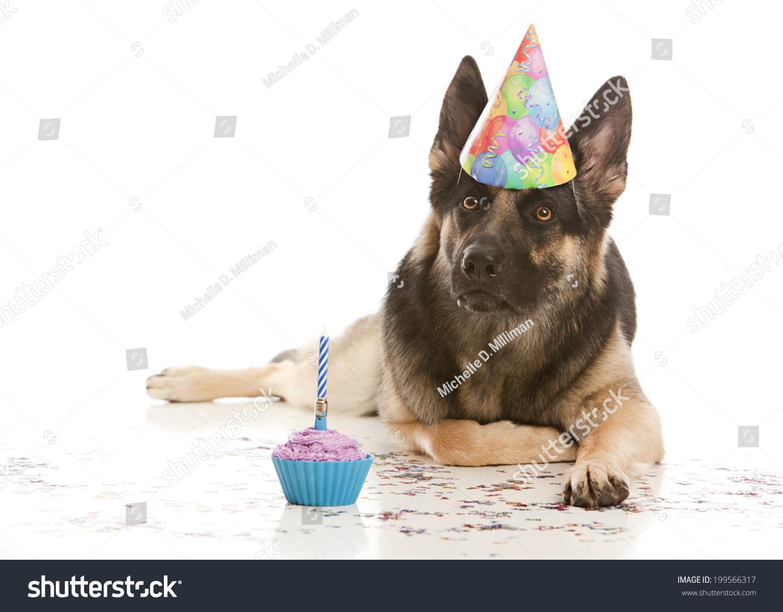 happy birthday beautiful german shepherd dog wearing a birthday hat and lying in confetti next