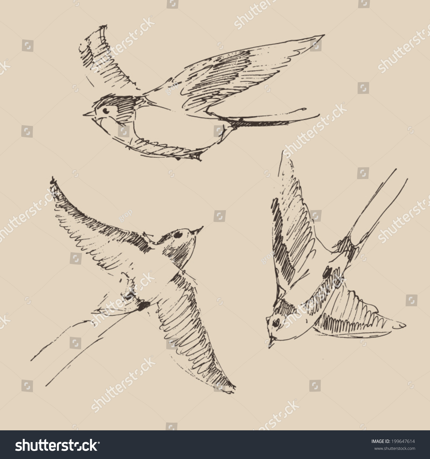 Set of sketches of flying swallows stock vector illustration - Swallows Flying Bird Set Collection Vintage Illustration Engraved Retro Style Hand Drawn