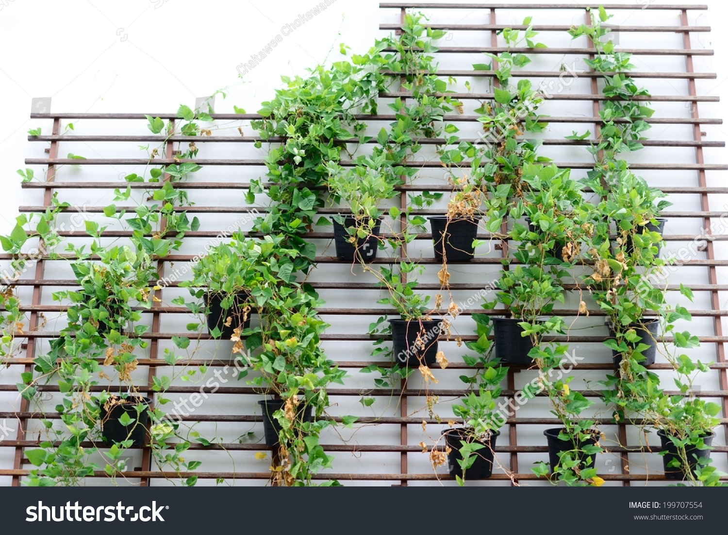 office gardening. Vertical Gardening Concept On A Rooftop Of An Office Building L