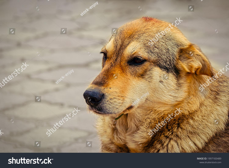 stock-photo-stray-dog-need-adoption-or-g