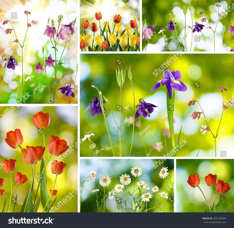 Image mix different beautiful flowers garden stock photo edit now image of mix different beautiful flowers in the garden izmirmasajfo