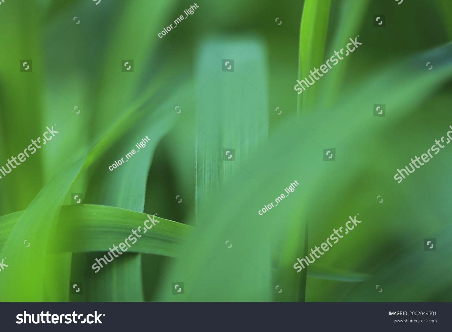 Abstract blurred background of green grass.