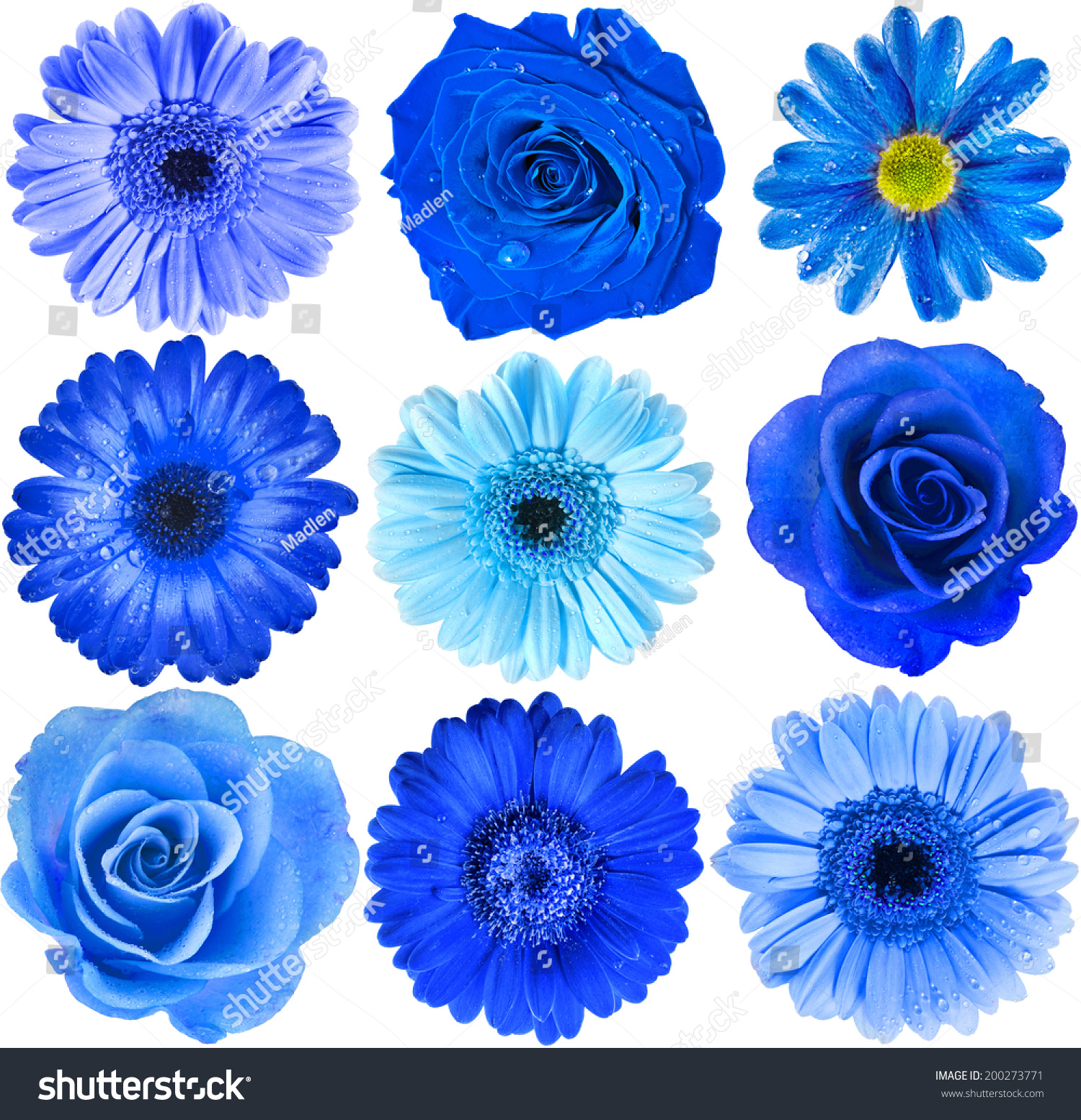 Various blue flowers head top view stock photo 200273771 various blue flowers head top view close up selection isolated on white background dhlflorist Gallery