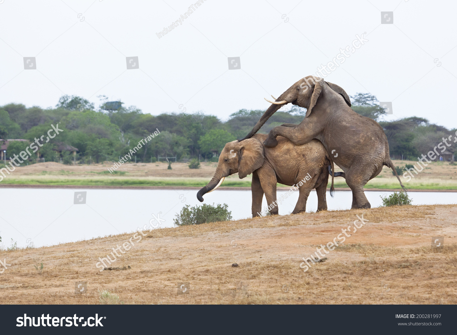 How do elephants have sex pic 72