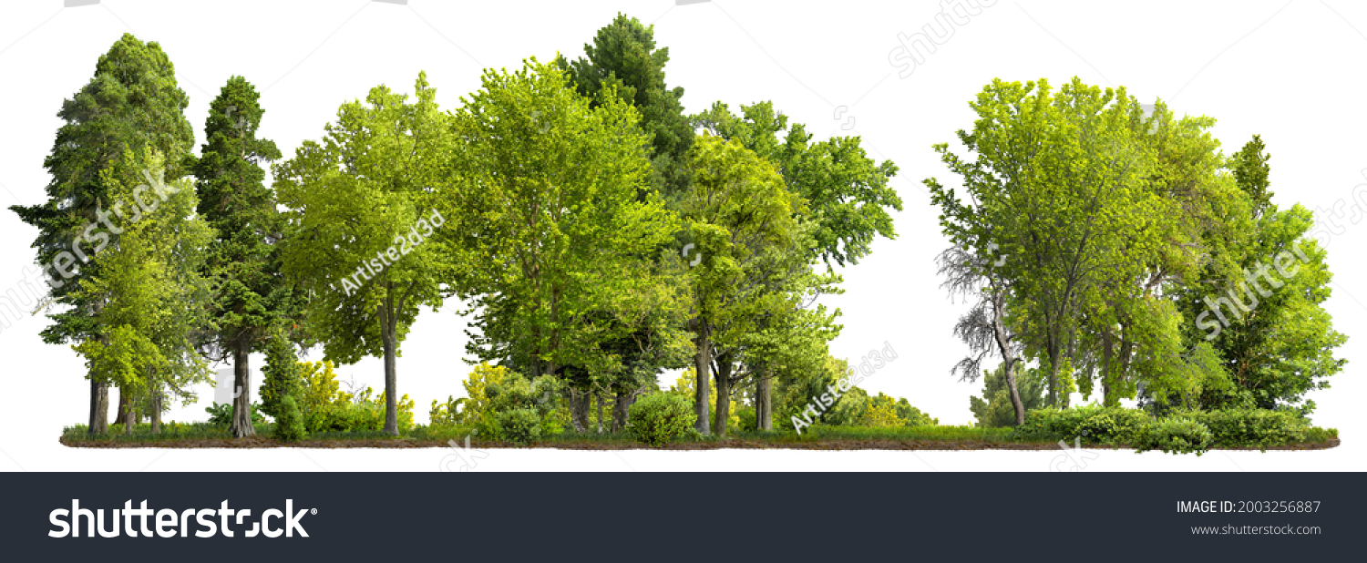 Cutout tree line. Row of green trees and shrubs in summer isolated on white background. Forestscape. High quality clipping mask. Forest and green foliage. #2003256887