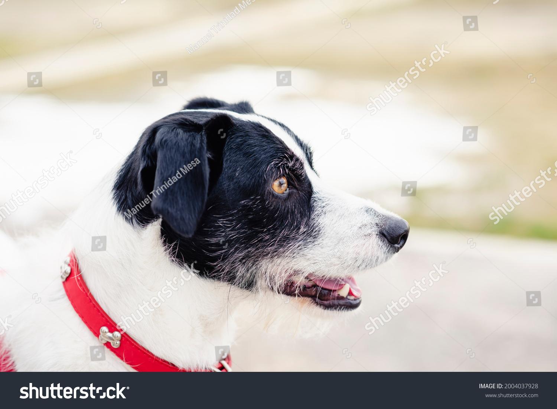 stock-photo-profile-portrait-of-a-black-