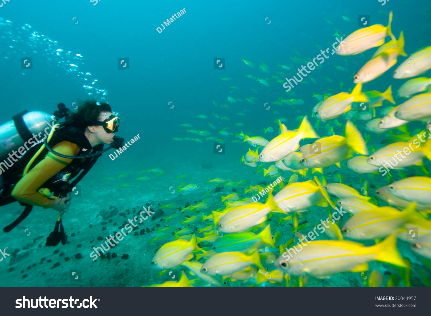 Snappers Yellow 2