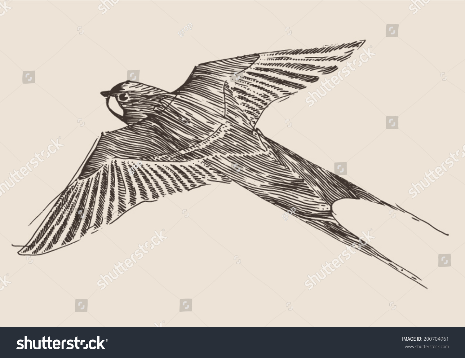 Swallows Flying Bird Vintage Illustration Engraved Stock ...