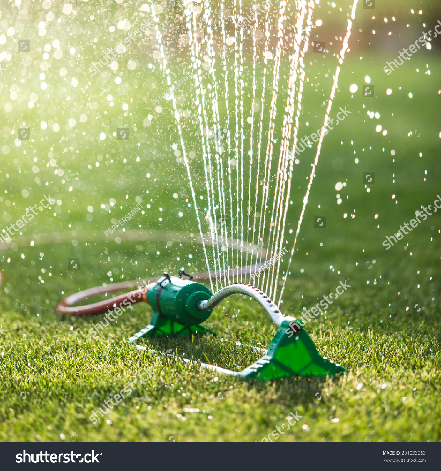 Grass Sprinkler Spaying Water Backlight Shallow Stock