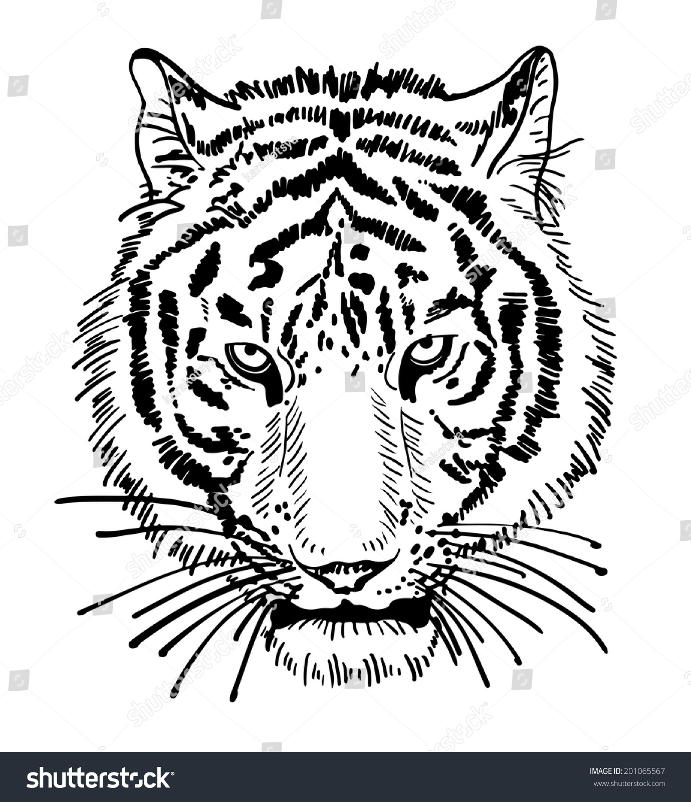 Line Drawing Tiger Face : Artwork tiger face portrait head silhouette stock