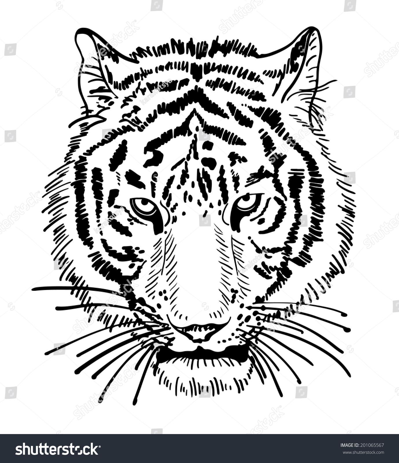 Artwork Tiger Face Portrait Head Silhouette Stock ...  Artwork Tiger F...