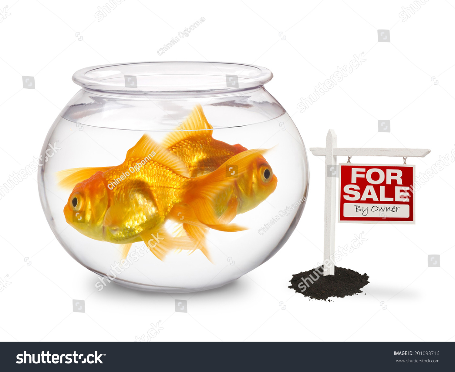 Gold Fish Bowl For Sale Stock Photo 201093716 Shutterstock