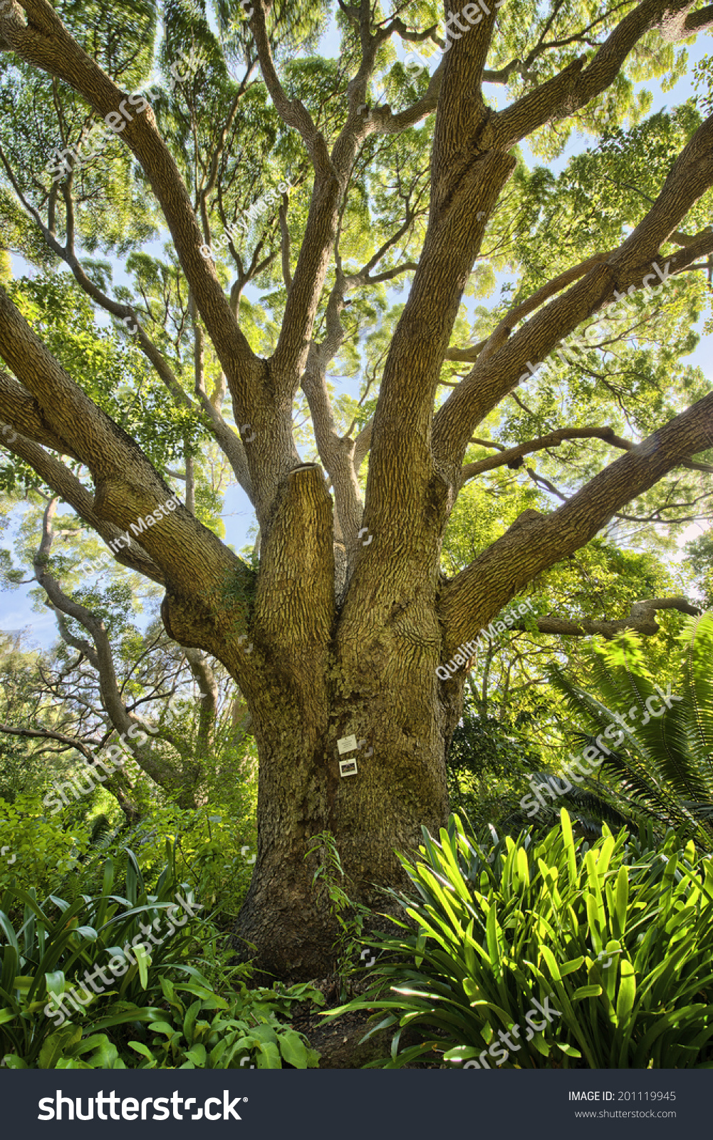 Kirstenbosch National Botanical Garden is acclaimed as one of the ...