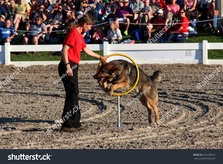 Dog Rescue Ottawa Valley