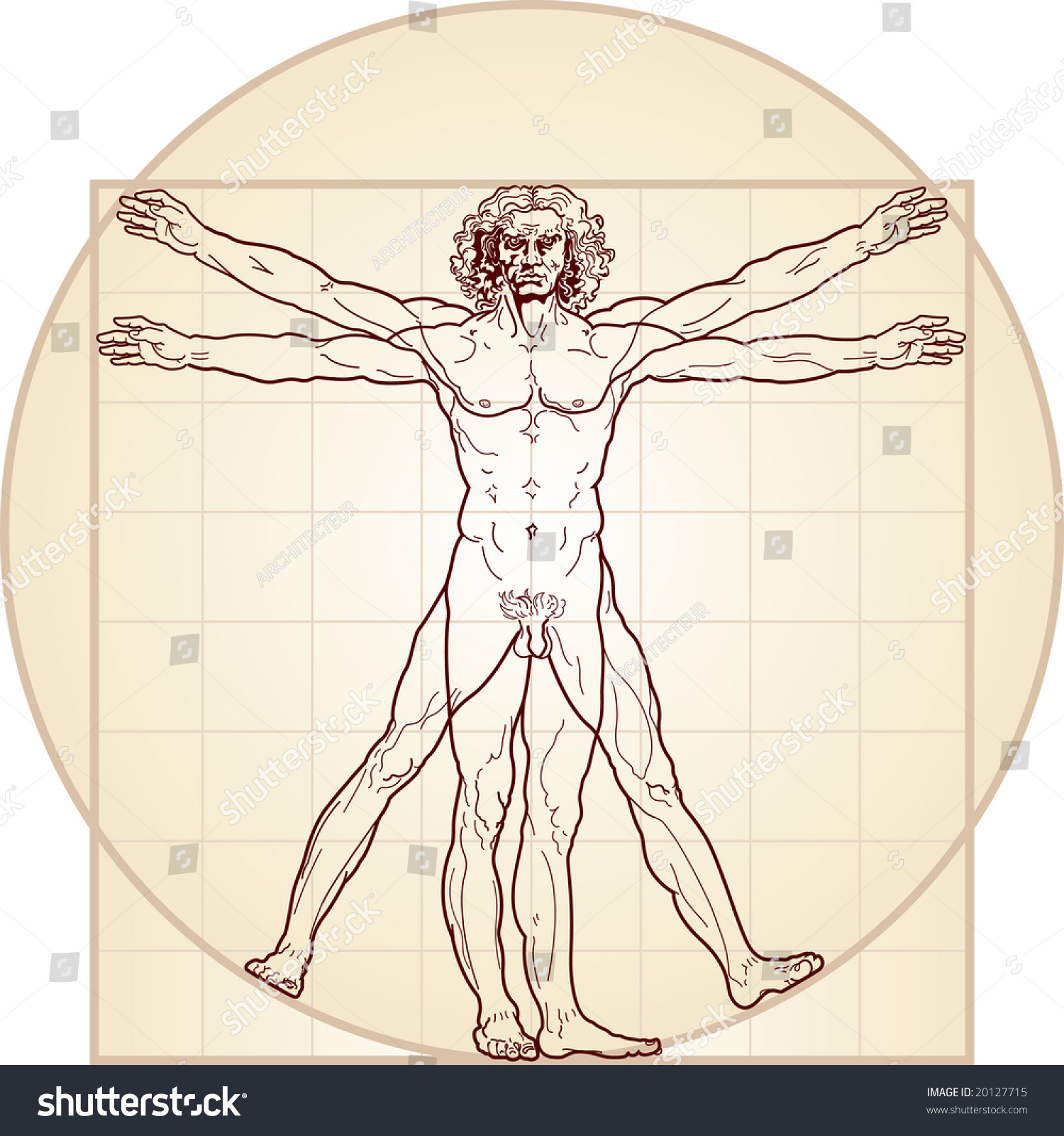 Vitruvian Man Detailed Drawing On Basis Stock Vector (Royalty Free ...