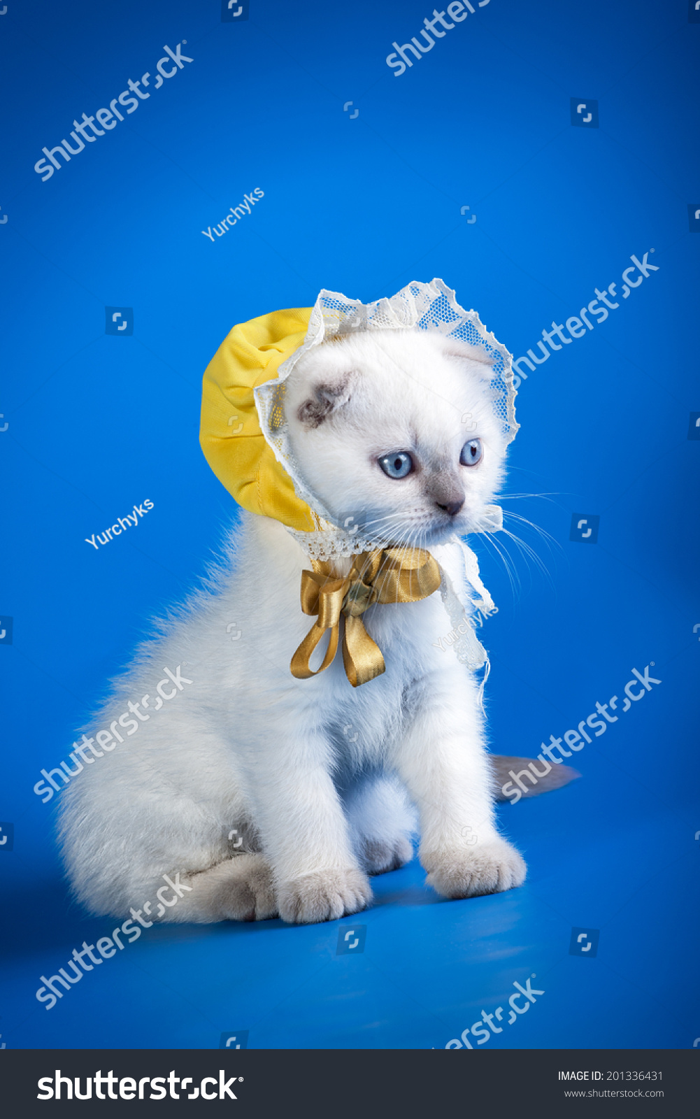 Cute Little Cat Wearing Funny Hat Stock Shutterstock