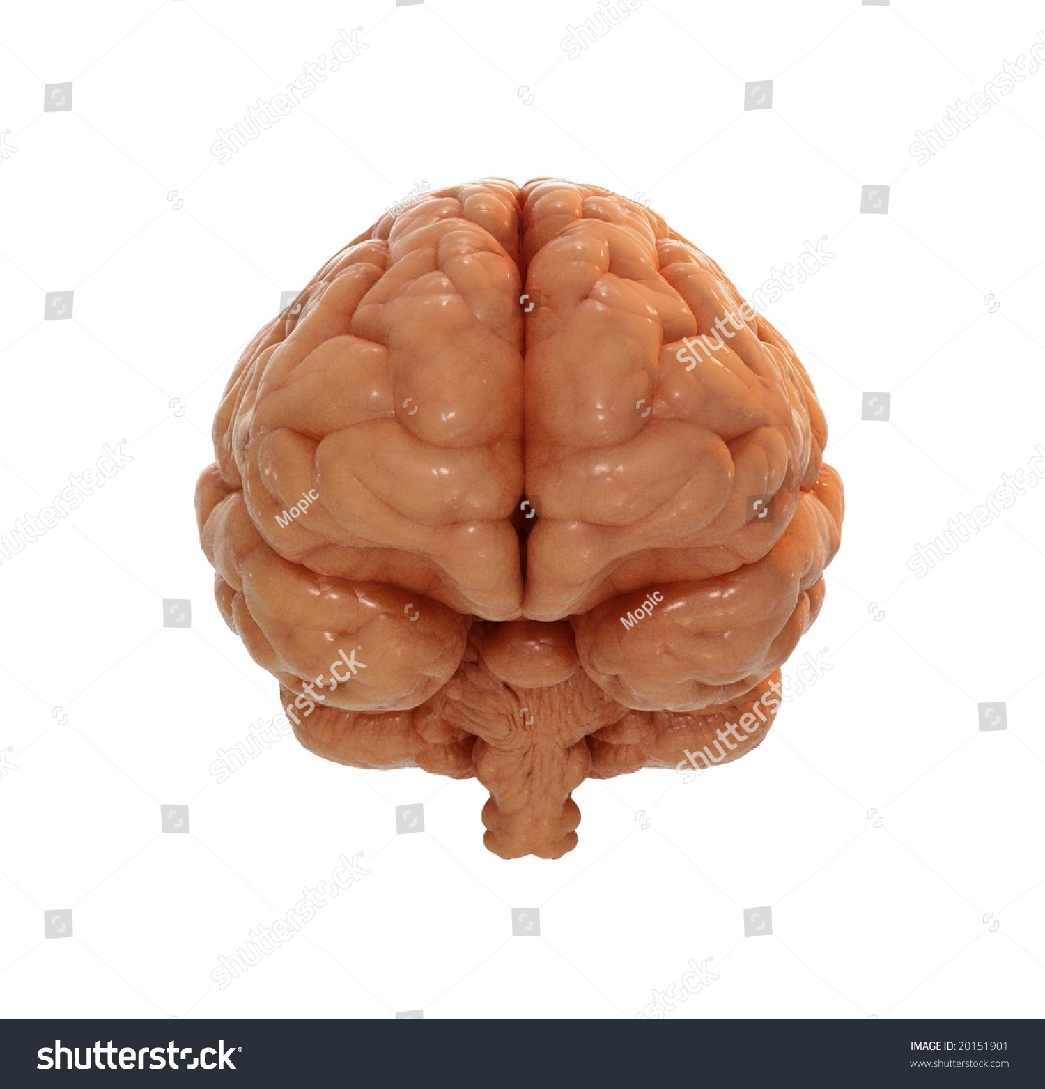 human brain front view stock illustration 20151901 Artery Clip Art Artery Clip Art