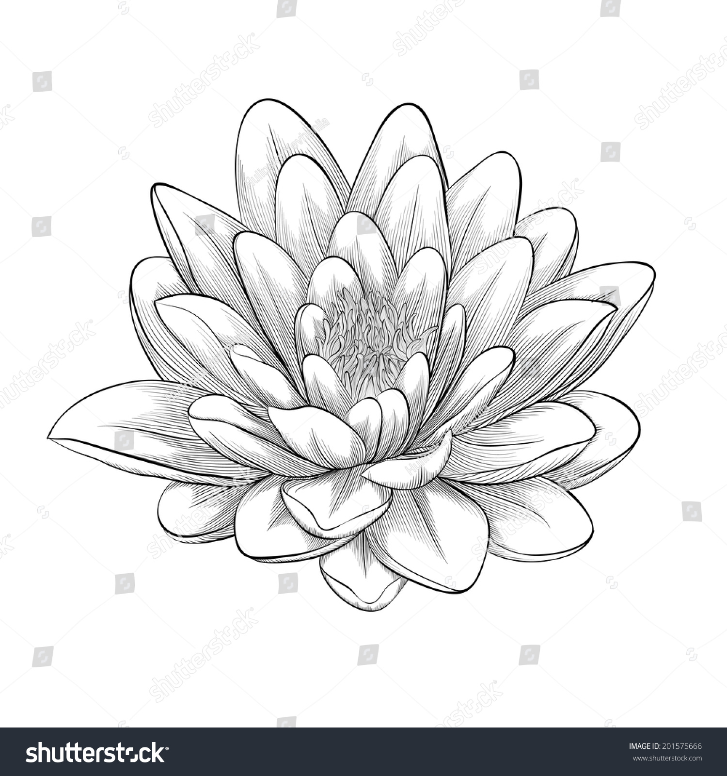 Lotus Flowers Icon The Black Line Drawn On A White Background Ez