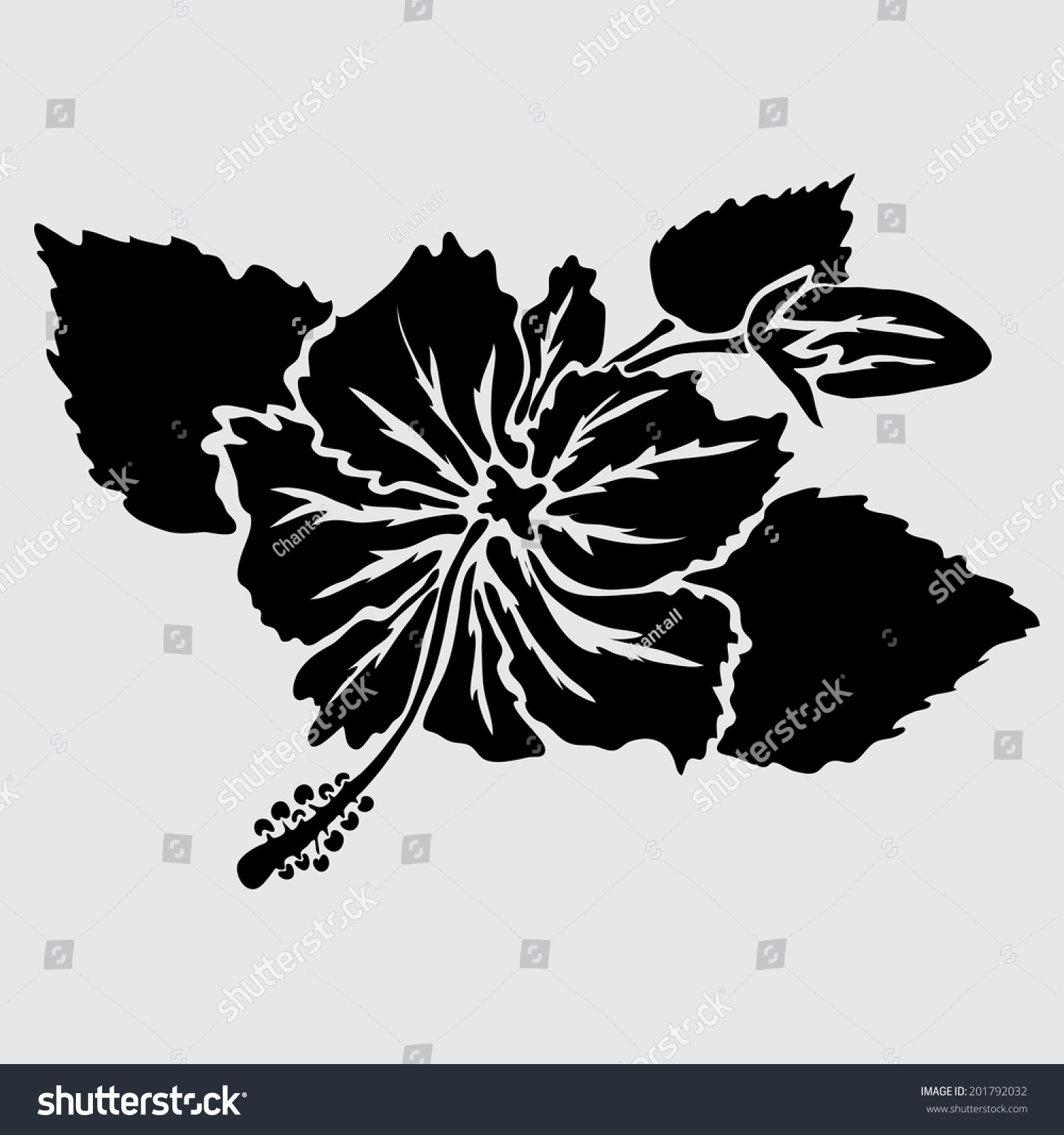 Elegant Decorative Hibiscus Flowers Design Element Stock Vector