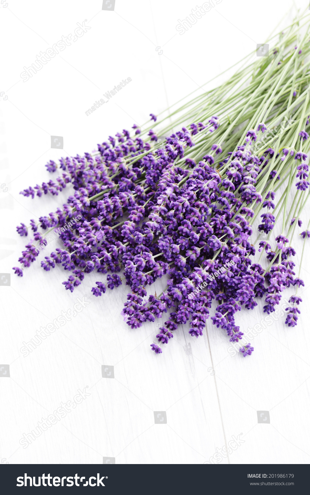 Bunch Of Lavender Flowers Isolated On White Flowers And Plants
