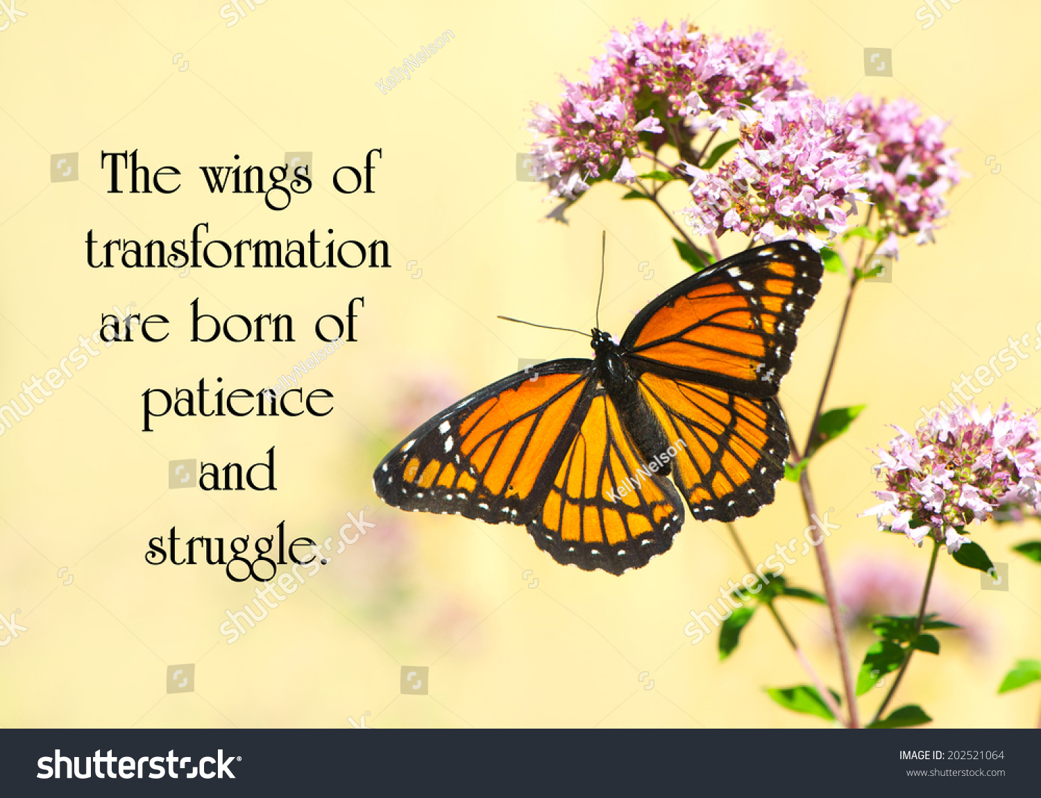 Royalty free inspirational quote on life by janet s 202521064 inspirational quote on life by janet s dickens with a beautiful monarch butterfly perched on some flowers stock photo izmirmasajfo