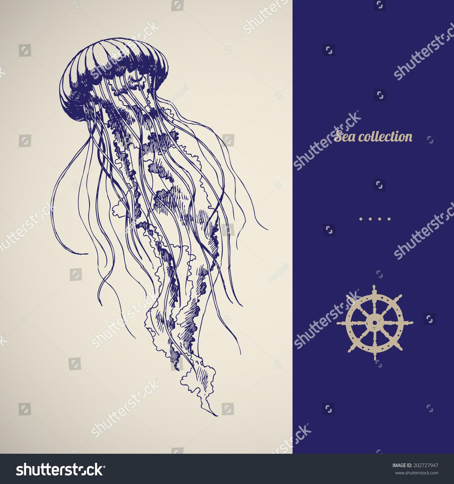Line Drawing Jellyfish : Hand drawn jellyfish vector illustration sea stock