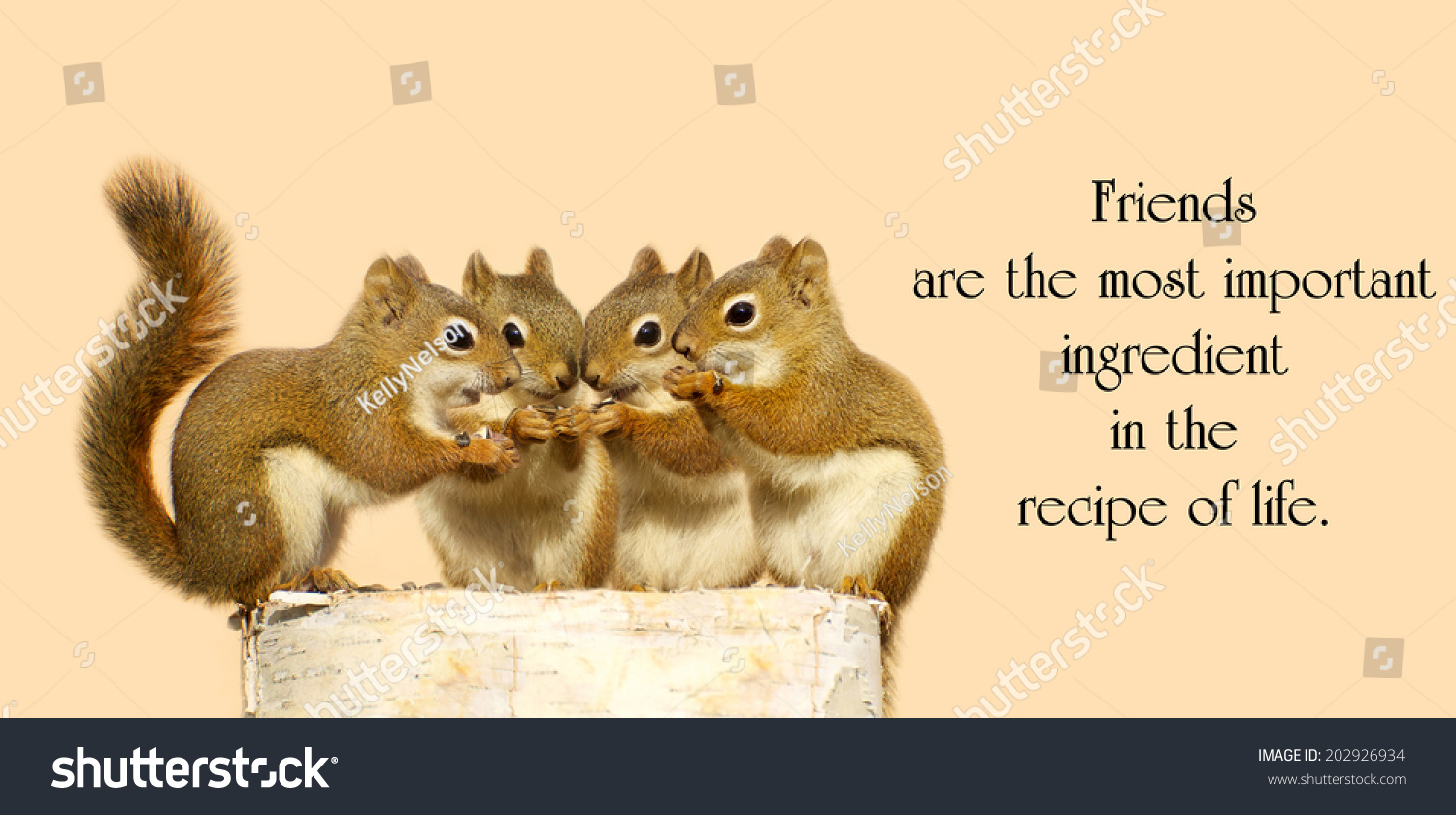 inspirational quote on friendship by dior stock photo edit now
