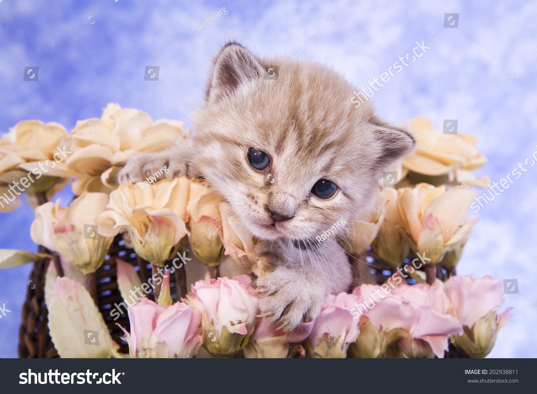 Cute Kitten Bouquet Pink Flowers On Stock Photo (Royalty Free ...