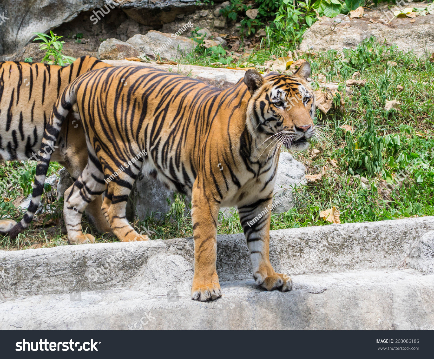 character sketches of the tiger in the house by ruskin bond Rabindranath tagore fras he advanced a vast canon that comprised paintings, sketches and doodles, hundreds of texts, and some two thousand songs his legacy also.