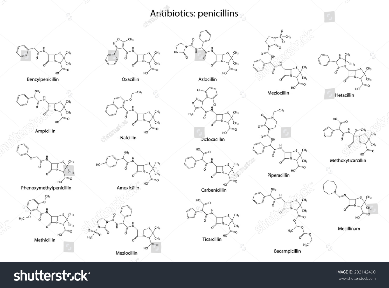 what comprises a penicillin structure essay Penicillin-tobramycin synergism against dueto s faecalis, which comprises the major- structure of nebramycin factor 6.