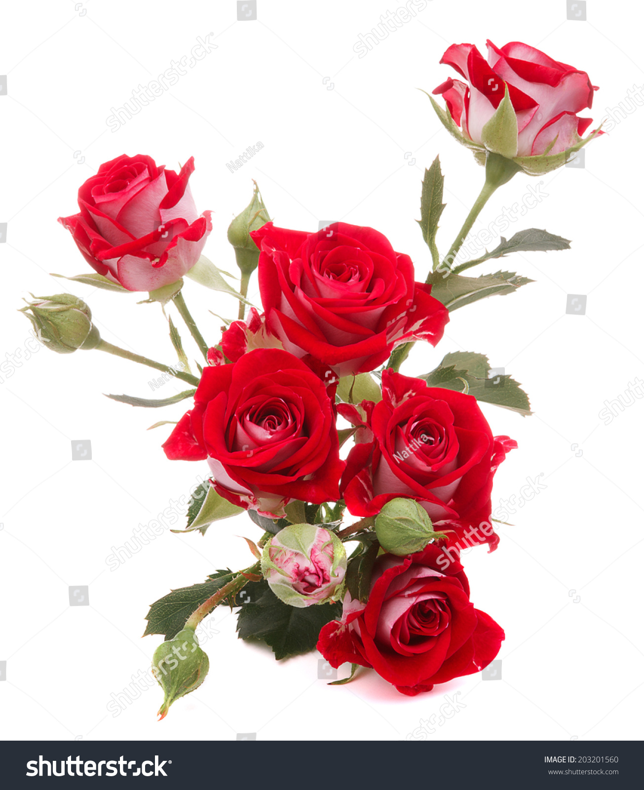 Red Rose Flower Bouquet Isolated On White Background Cutout Ez Canvas