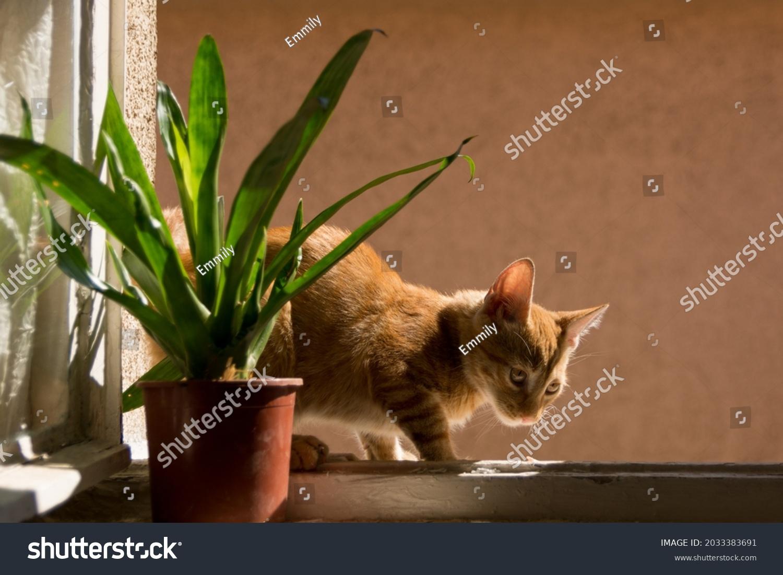 stock-photo-orange-domestic-cat-sitting-